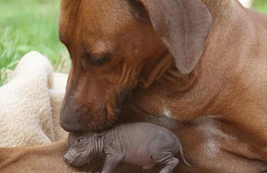 animal-friendship-2
