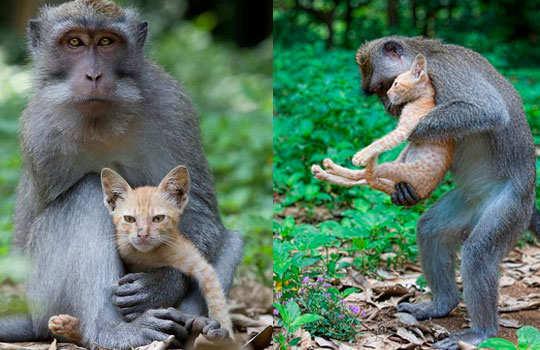 animal-friendship-3