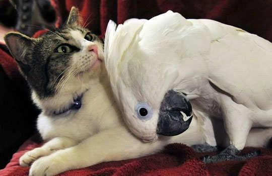 animal-friendship-7