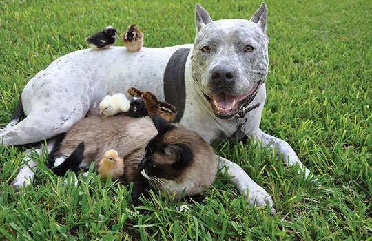 animal-friendship-8