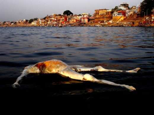 corpse-floating-in-ganges