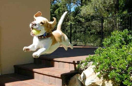 pet-dogs-care-3