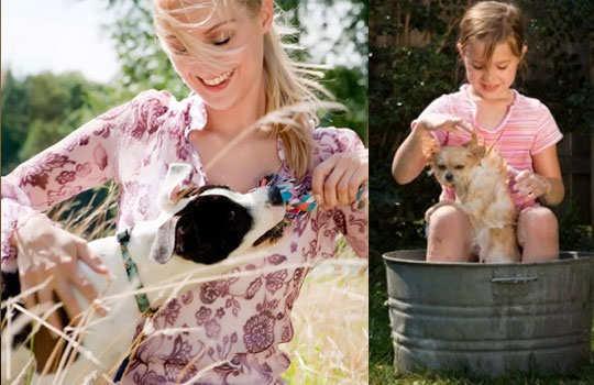 pet-dogs-care-4