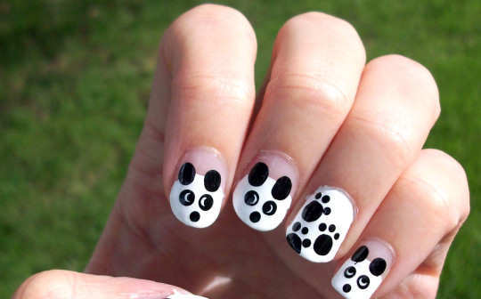 black-and-white-panda-and-paws