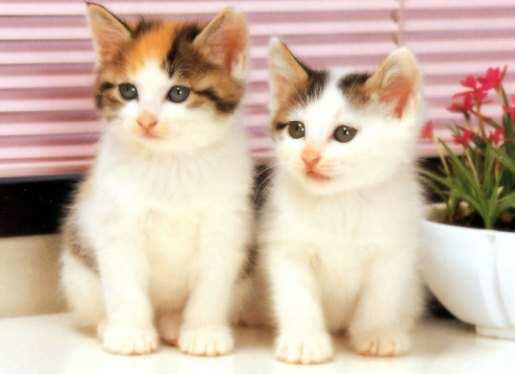 cute-white-cat
