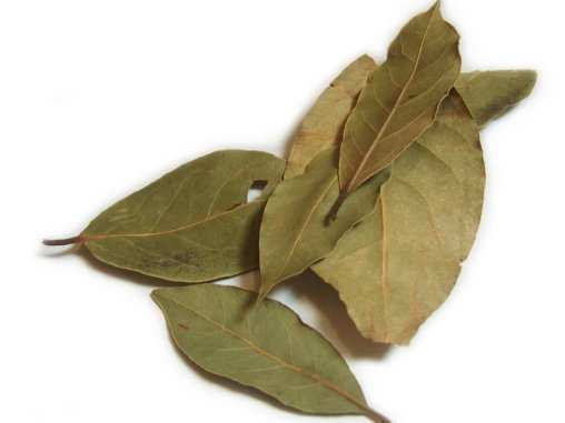 bay-leaf-home-remedies-for-bronchitis