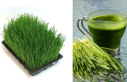 reduce-sweating-home-remedies-wheat-grass-juice