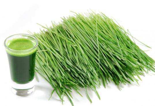 wheat-grass-juice