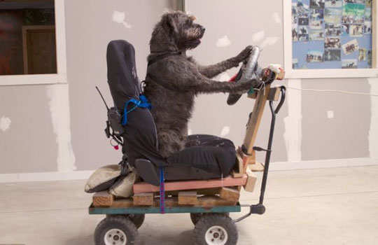 world's-first-driving-dog-5
