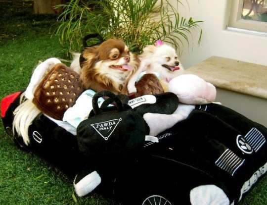 paris-hilton-dogs