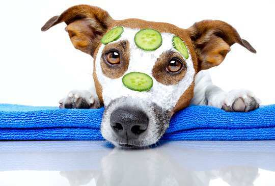 Home-Remedies-for-Dog-Acne