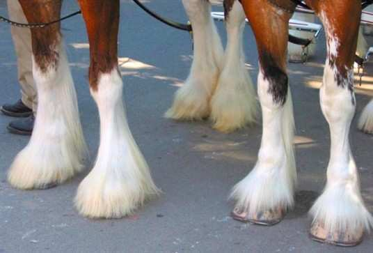 Hooves-and-Feathers