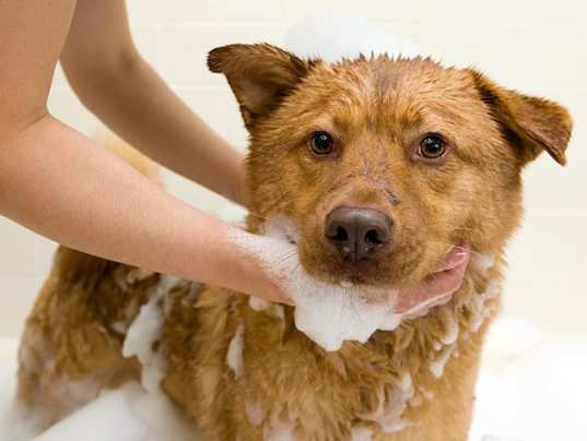 Can Dogs Get Acne?