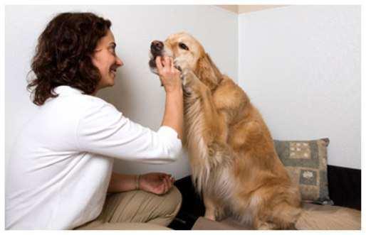 dog-pimple