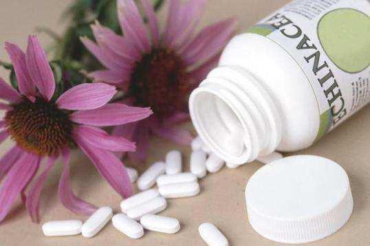 echinacea-medicine