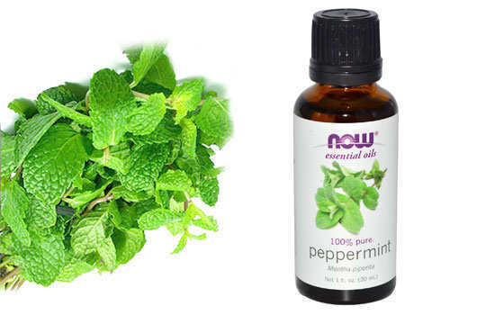 essential-oils-to-rejuvinate-your-skin-peppermint-3