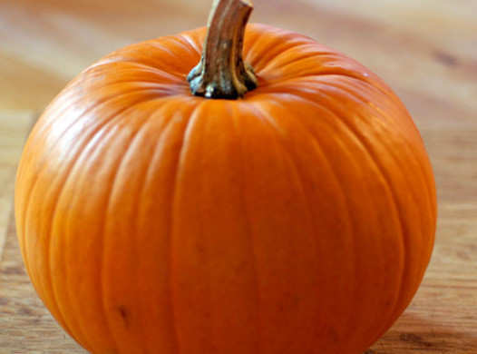 human-foods-that-dog-can-eat-pumpkin