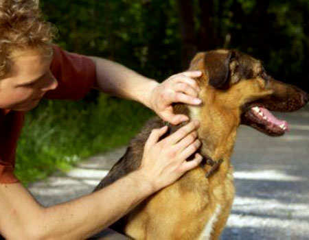 ticks-remove-from-dogs-1
