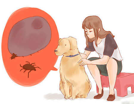 ticks-remove-from-dogs-main