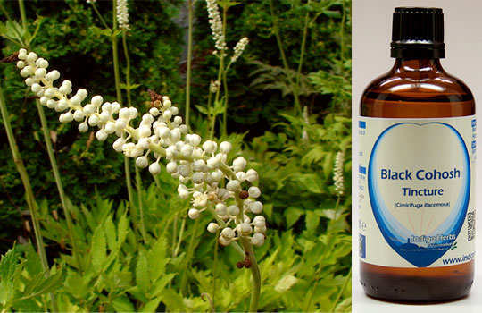 menopause-home-remedies-black-cohosh