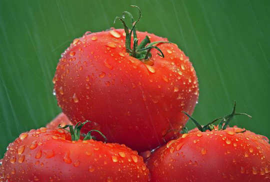 13-foods-to-keep-you-hydrated-tomatoes